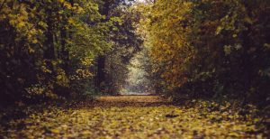 autumn-trail